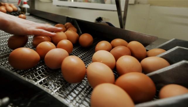 """Photo of Anche in Umbria uova contaminate dal Fibronil. Barberini: """"Nessun pericolo per la salute"""""""