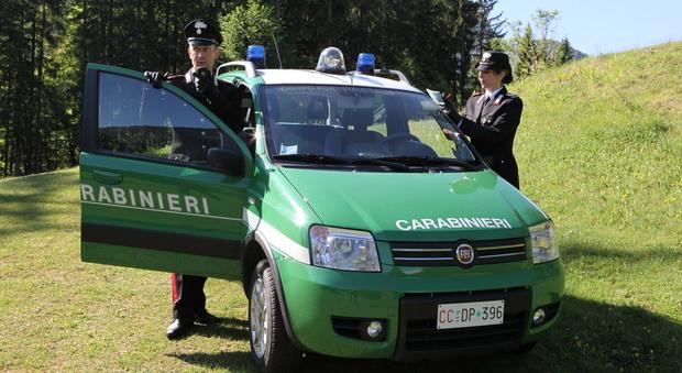 Photo of I carabinieri scoprono una trappola per catturare gli animali, nei guai un 72enne ternano