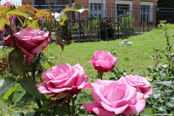 Photo of Terni in fiore: una magia di colori e profumi