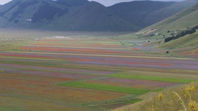 Photo of A Castelluccio la natura dà spettacolo: le immagini della fioritura più bella
