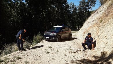 """Photo of Avigliano Umbro: strada """"abusiva"""" realizzata all'interno di un bosco, denunciati in tre"""