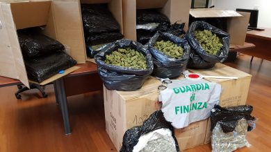 Photo of Perugia: la guardia di finanza sequestra 150 chili di marijuana. Un arresto e sette denunce